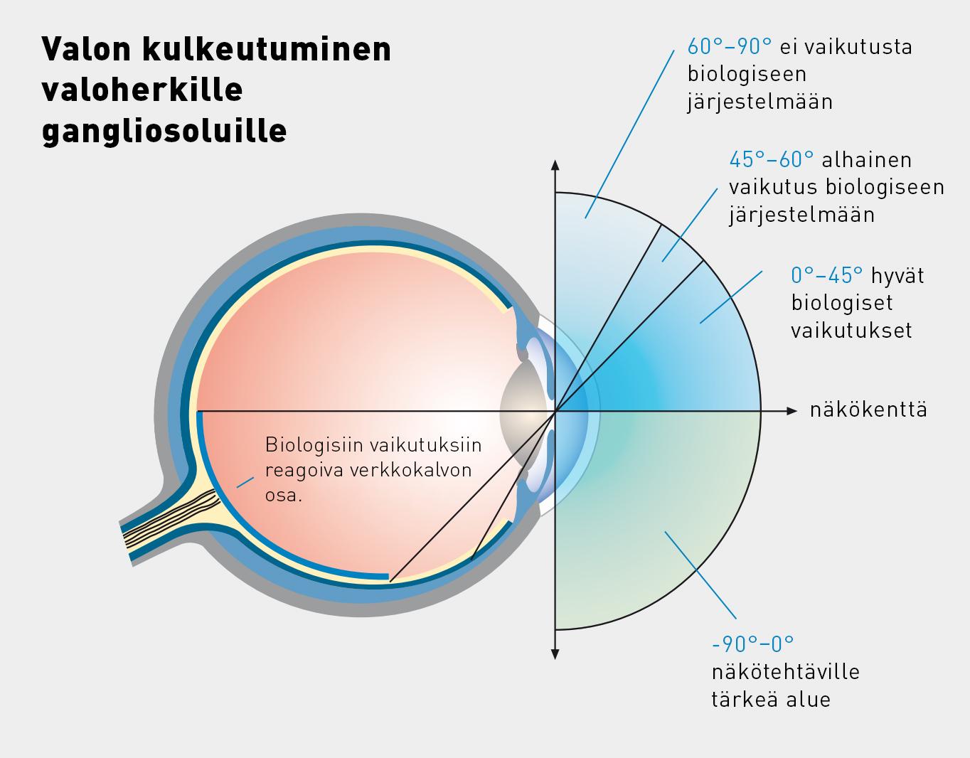 Biologisten vaikutusten kannalta oleellista on verkkokalvon valoherkille gangliosoluille pääsevän valon määrä. Alkuperäinen kuva licht.de.